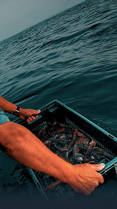 Dettaglio sulla mani in un momento di pesca